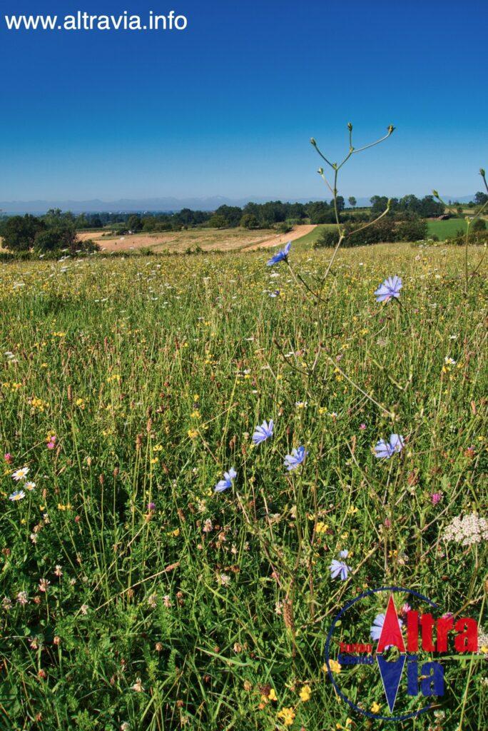 2003 fiori e campo