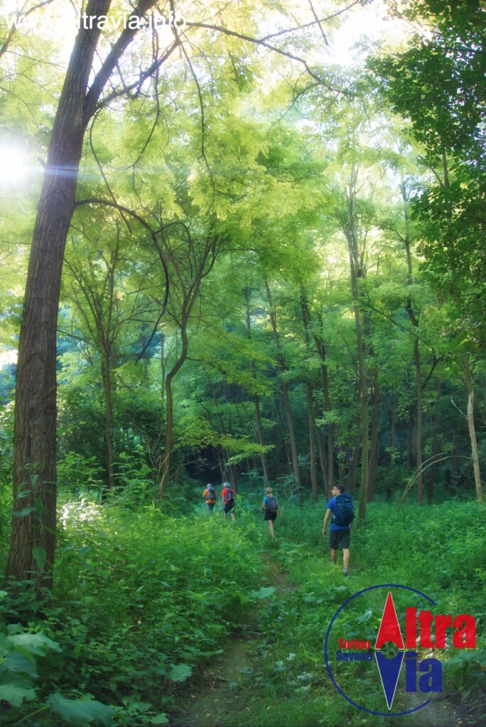 3008* entrando nel bosco