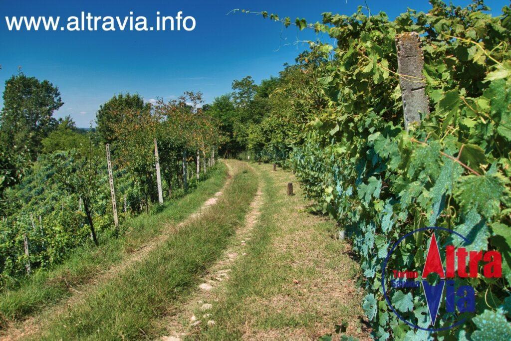 3047 via nelle vigne