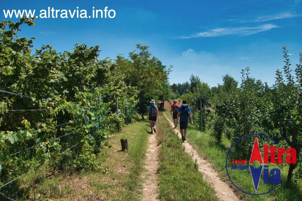 3048* in cammino nelle vigne