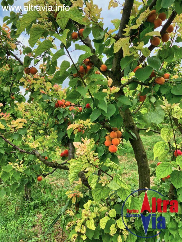 4049 frutta