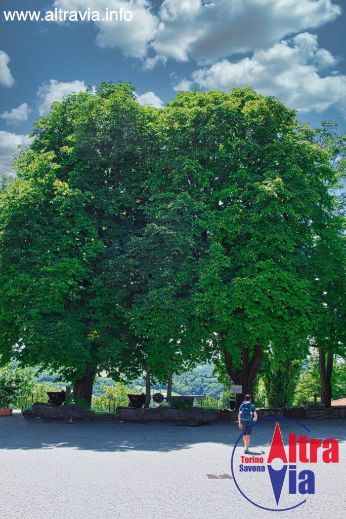 5041 albero monumentale