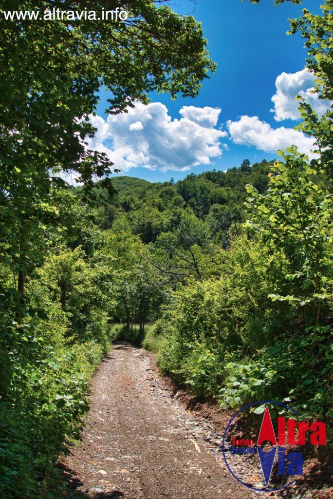 7021 strada nel bosco