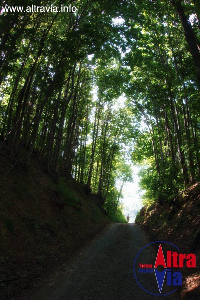 7022 strada nel bosco 2*